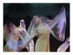 Leerlingen voorstelling Balletschool Petrella Lion 2014